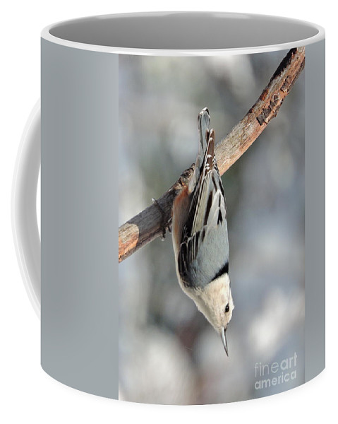 Nuthatch Coffee Mug featuring the photograph Nuthatch by Mim White