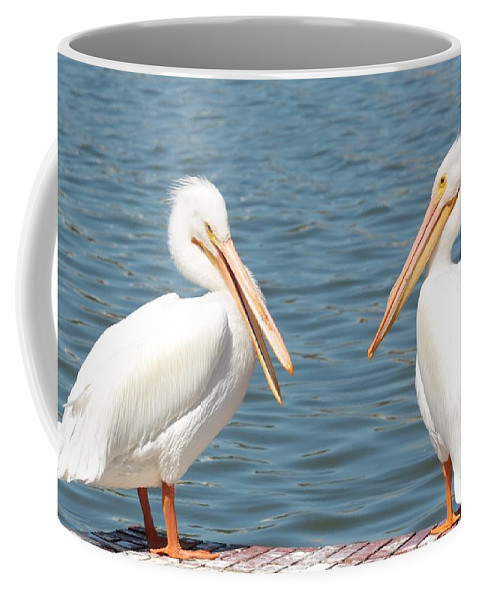 American White Pelican Coffee Mug featuring the photograph Pelican Pals by Carol Groenen