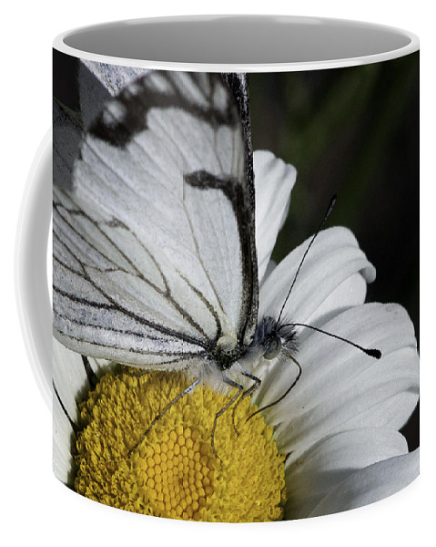 Pine White Coffee Mug featuring the photograph Pine White Butterfly by Betty Depee