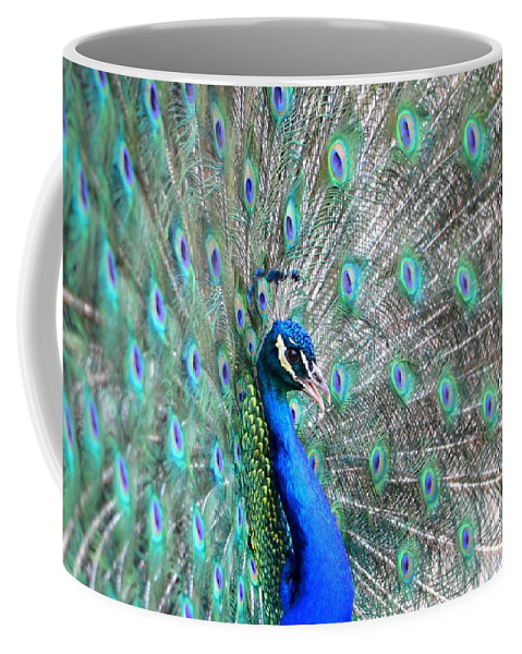 Peacock Coffee Mug featuring the photograph Proud by Deena Stoddard
