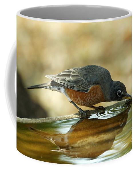Birds Coffee Mug featuring the photograph Robin Drinking by Lori Tordsen