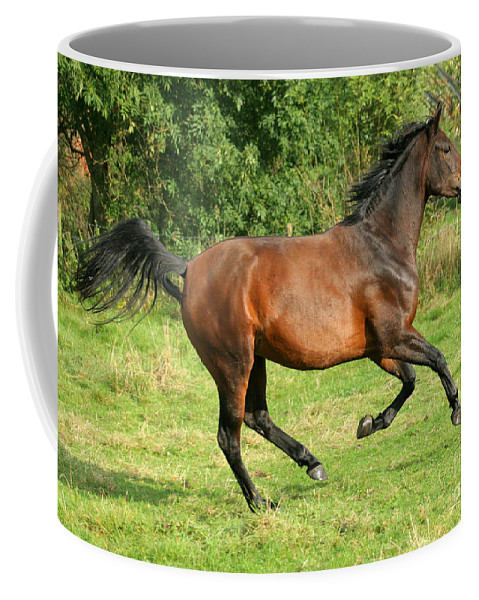Horse Coffee Mug featuring the photograph Running Free by Angel Ciesniarska