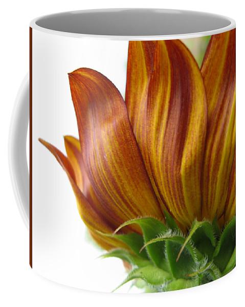 Sunflower Coffee Mug featuring the photograph Sunflower by Dan McCafferty