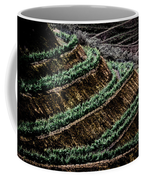 Vineyard Coffee Mug featuring the photograph Vineyard by Edgar Laureano