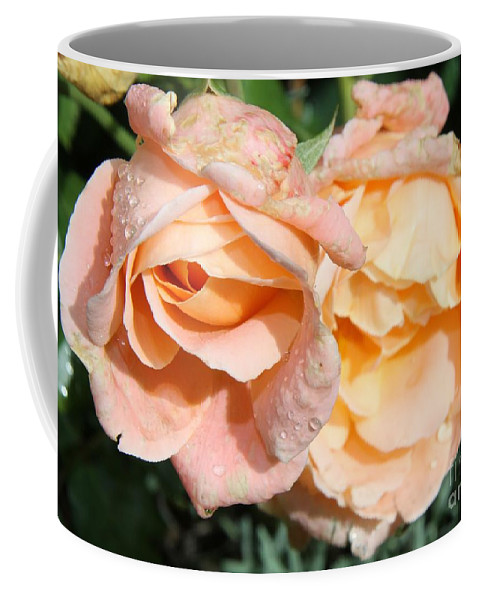 Pink Rose Coffee Mug featuring the photograph Wet Beauty by Christiane Schulze Art And Photography