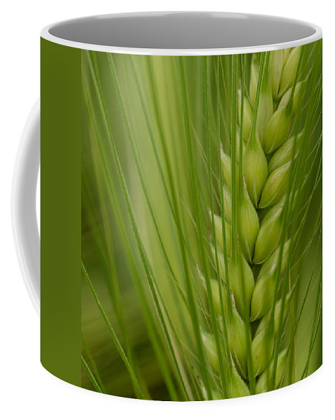 Wheat Coffee Mug featuring the photograph Wheat by TouTouke A Y