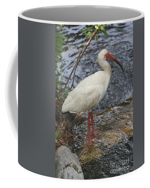 White Coffee Mug featuring the photograph White Ibis by Ken Keener