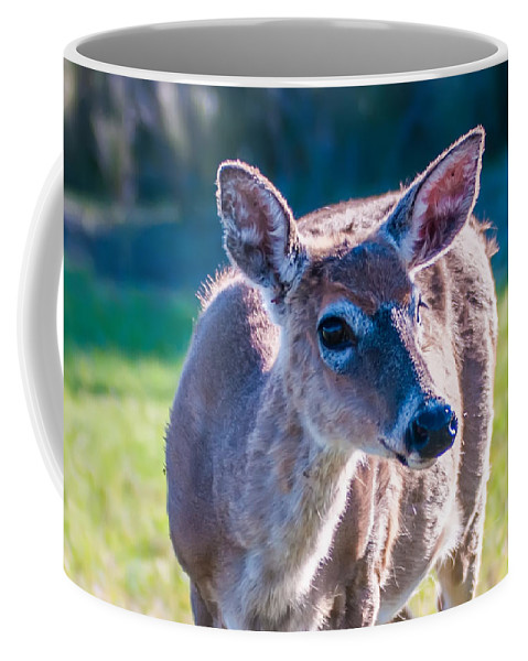 White Coffee Mug featuring the photograph White Tail Deer Bambi In The Wild by Alex Grichenko
