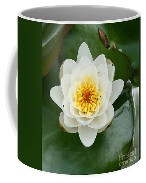 Waterlily Coffee Mug featuring the photograph White Waterlily by Christiane Schulze Art And Photography