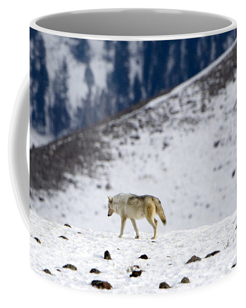 White Wolf Coffee Mug featuring the photograph White Wolf by Deby Dixon
