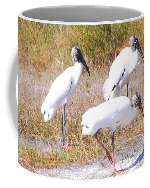 Gathering At Lakes Park In Ft.myers Coffee Mug featuring the photograph Wood Storks by Robert Floyd