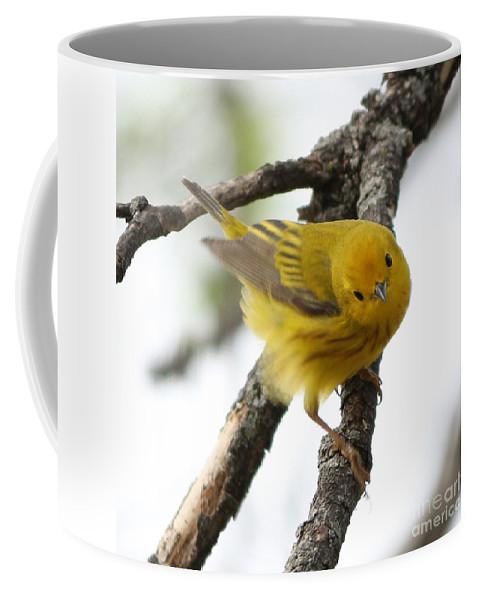 Yellow Warbler Coffee Mug featuring the photograph Yellow Warbler by Lori Tordsen