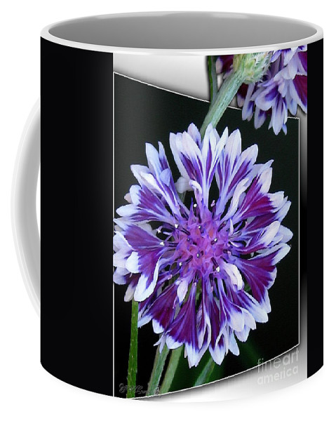 Bachelor Button Coffee Mug featuring the painting Bachelor Button From The Frosted Queen Mix by J McCombie