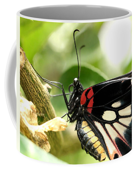 Butterfly Coffee Mug featuring the photograph Butterfly by Heike Hultsch