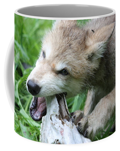 Wolf Coffee Mug featuring the photograph Gray Wolf Pup by Amanda Stadther