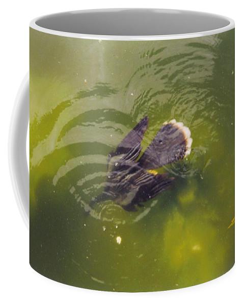 Lakes Park Inft.myers Coffee Mug featuring the photograph Anhinga Or Snake Bird by Robert Floyd