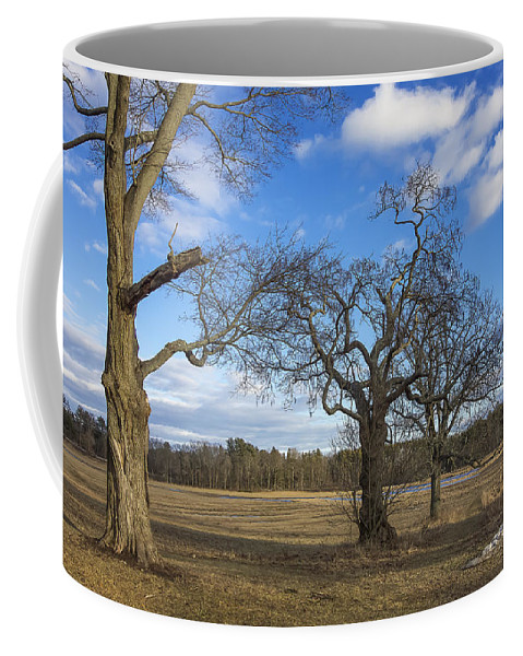 Trees Coffee Mug featuring the photograph 3 Appleton Trees by David Stone