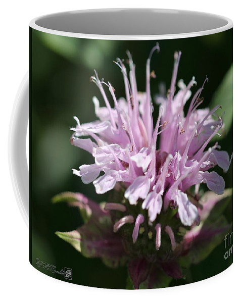 Bee Balm Coffee Mug featuring the photograph Bee Balm From The Panorama Mix by J McCombie