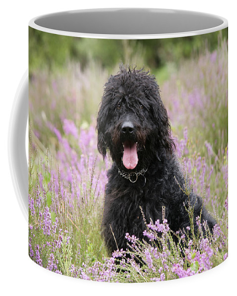 Labradoodle Coffee Mug featuring the photograph Black Labradoodle by John Daniels