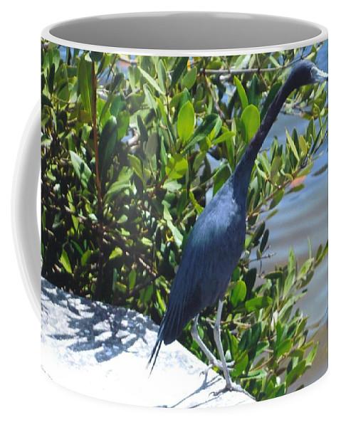 Matlacha Coffee Mug featuring the photograph Blue Heron by Robert Floyd