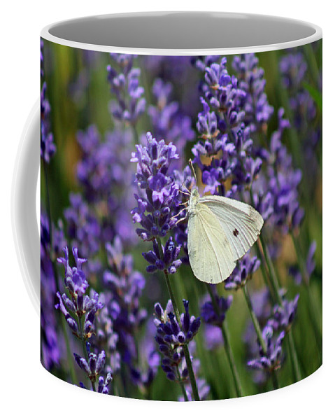Butterfly Coffee Mug featuring the photograph Cabbage White Butterfly by Karen Adams