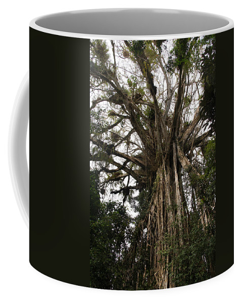 Australia Queensland Qld Coffee Mug featuring the digital art Cathedral Fig Tree by Carol Ailles