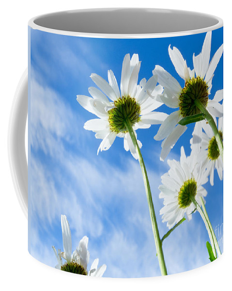 Blooming Coffee Mug featuring the photograph Close-up Shot Of White Daisy Flowers From Below by Stephan Pietzko