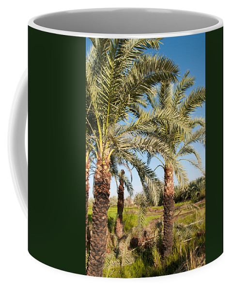 Oasis Palm Trees Coffee Mug featuring the digital art Dakhla by Carol Ailles