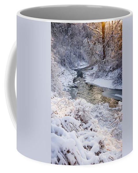 Winter Coffee Mug featuring the photograph Forest Creek After Winter Storm by Elena Elisseeva
