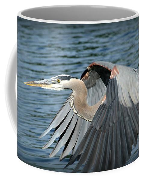 Great Blue Herron In Flight Coffee Mug featuring the photograph Great Blue Herron by Warrena J Barnerd