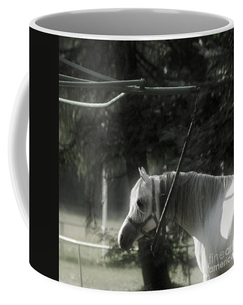 Horse Coffee Mug featuring the photograph In The Captivity by Angel Tarantella