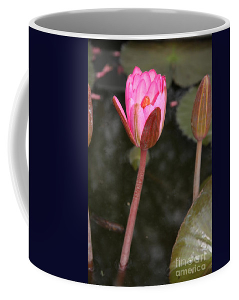 Lotus Coffee Mug featuring the photograph Pink Lotus by Christiane Schulze Art And Photography