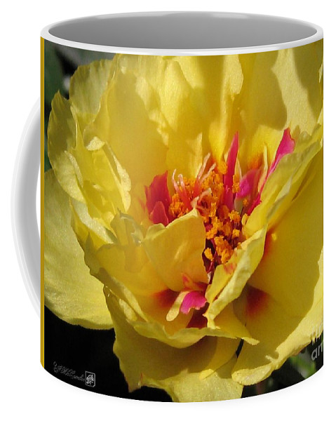 Mccombie Coffee Mug featuring the photograph Portulaca Named Happy Hour Banana by J McCombie