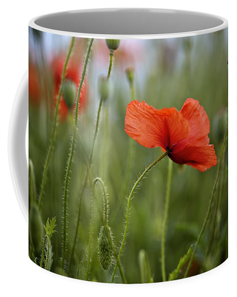 Red poppy flowers for sale gallery flower decoration ideas red poppy flowers for sale gallery flower decoration ideas poppy flowers for sale images flower decoration mightylinksfo Gallery
