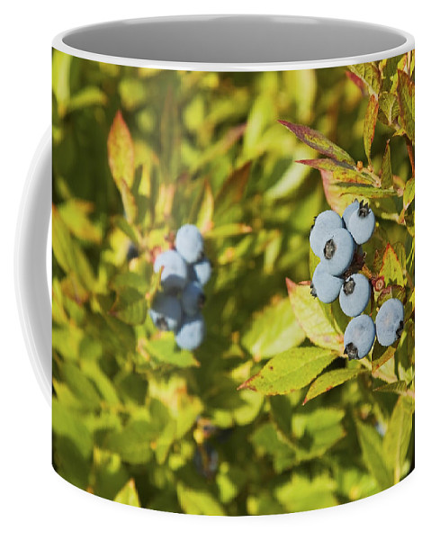 Blueberry Coffee Mug featuring the photograph Ripe Maine Low Bush Wild Blueberries by Keith Webber Jr