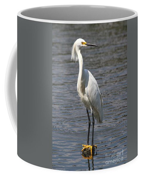 This Photo Was Captured At Gatorland's Alligator Breeding Marsh And Bird Rookery In Orlando Coffee Mug featuring the photograph Snowy Egret by Ken Keener