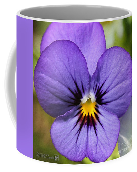 Mccombie Coffee Mug featuring the painting Viola Named Sorbet Blue Heaven Jump-up by J McCombie