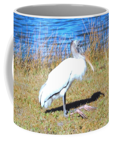 Resting On His Knees At Lakes Park In Ft.myers Coffee Mug featuring the photograph Woodstork by Robert Floyd