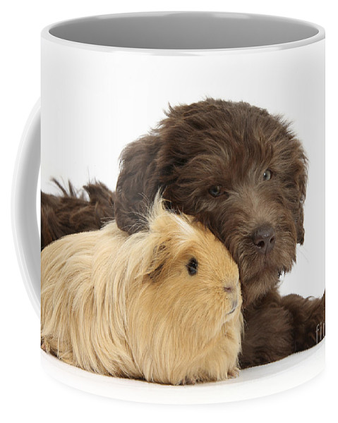 Chocolate Labradoodle Puppy Coffee Mug featuring the photograph Puppy And Guinea Pig by Mark Taylor