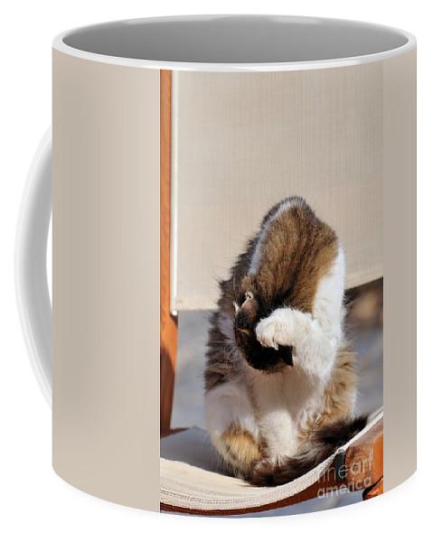 Cat Coffee Mug featuring the photograph Cat In Hydra Island by George Atsametakis