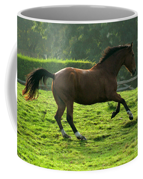 Horse Coffee Mug featuring the photograph Bay Horse by Angel Ciesniarska