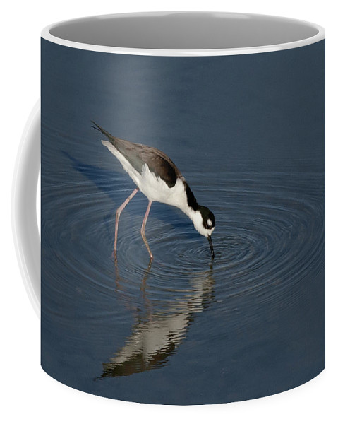 Black Necked Coffee Mug featuring the photograph Black Necked Stilt by Betty Depee