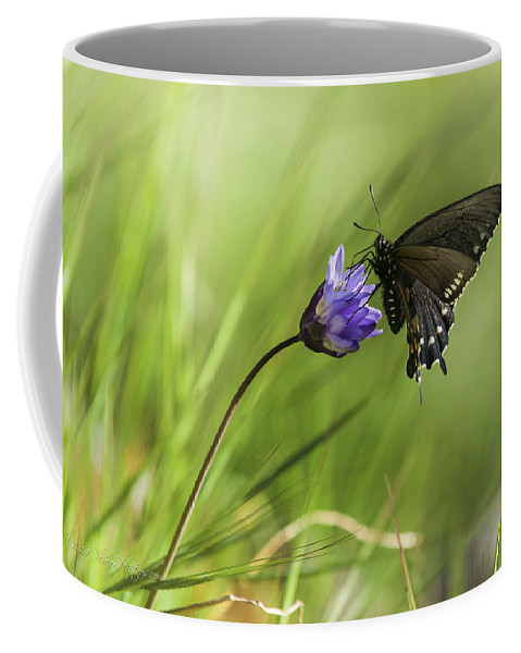 Pipevine Swallowtail Coffee Mug featuring the photograph Pipevine Swallowtail Butterfly by Jim Thompson