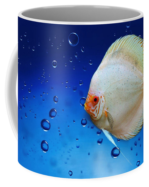 Fish Coffee Mug featuring the photograph Discus Fish by Heike Hultsch
