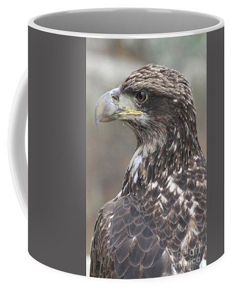 Juvenile Coffee Mug featuring the photograph Juvenile Bald Eagle by Ken Keener