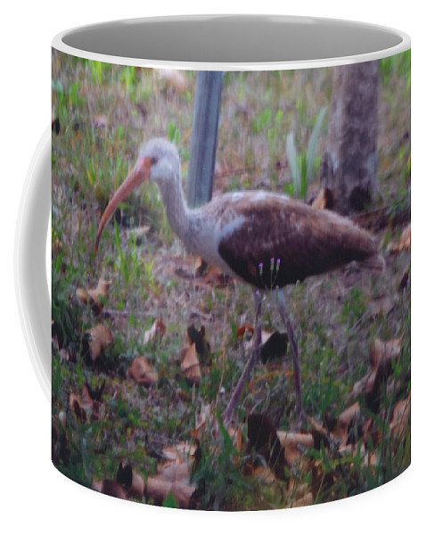 Eating Grubs And Bugs In My Yard. Coffee Mug featuring the photograph Juvenile White Ibis by Robert Floyd