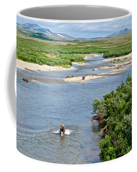 Lay Of The Land Coffee Mug featuring the photograph 4-lay Of The Land Many Grizzly Bears In Moraine River In Katmai National by Ruth Hager
