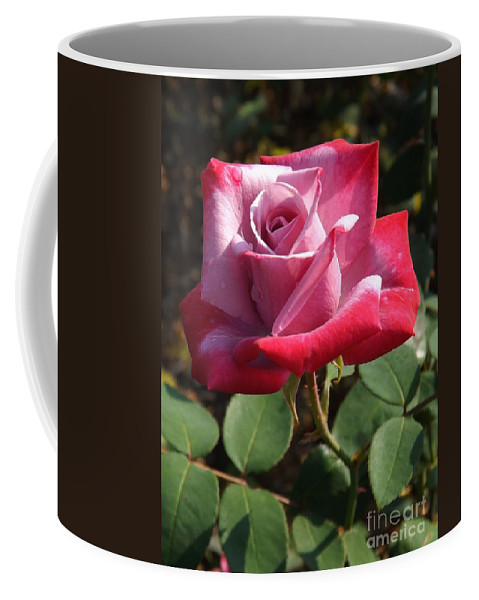 Love Coffee Mug featuring the photograph Paradise Rose by Sara Raber