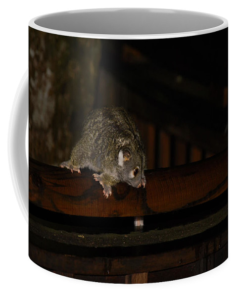 Australia Queensland Qld Coffee Mug featuring the digital art Possum by Carol Ailles