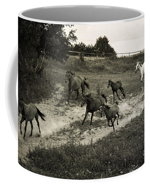 Horses Coffee Mug featuring the photograph Running Free by Angel Ciesniarska
